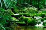 Secluded rainforest stream